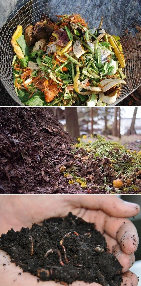 """Good Composting Tips : Collect all grass clipping and yard trash but be certain to mix with the """"brown"""" materials like leaves and shredded paper to add carbon. Do not compost meats or pet dropping. Avoid all pesticides or herbicide treated material. Keep your compost damp but not wet. Turnover the pile as often as you can to speed up the procedure. worms and most bugs are ok.  add compost to your garden a few weeks before planting."""