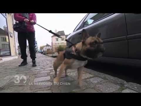 dressage de base d'un chien ou d'un chiot - puppy training - YouTube