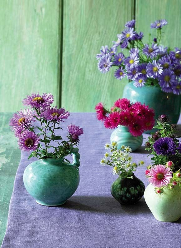 Kolorowe Astry Marcinki Piekne Jesienne Kwiaty Do Domu I Ogrodu Astry Maricnki Jesiennekwiaty Kwiaty Dekoracje Oz Flower Garden Flowers Garden Styles