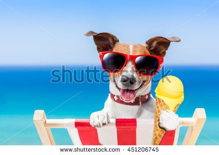 jack russell dog  on hammock at the beach relaxing  on summer vacation holidays…