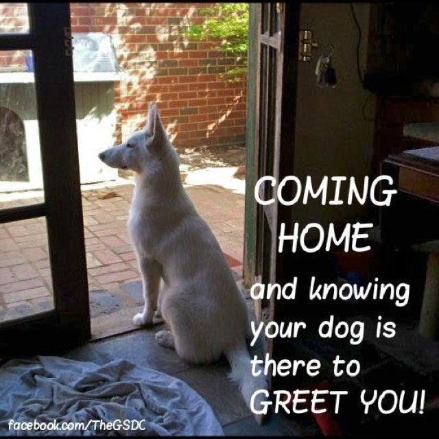 Unconditional Love: German Shepards, Animal Kingdom, Puppies Lve, Puppies Luv, Happy Is, Shepherd Dogs, Awesome German, German Shepherd, Dogs Life
