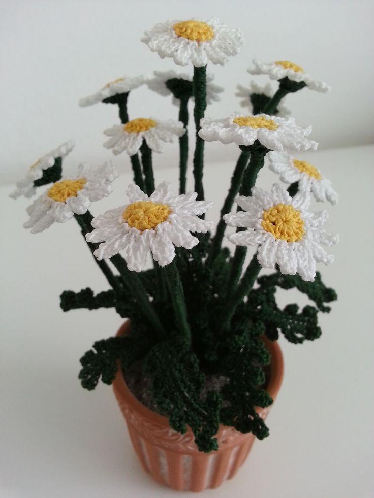 E'uno dei fiori più comuni  ed è  noto come fiore della semplicità . La margheritina di campo è per molti un fiore legato ai ricordi dell...