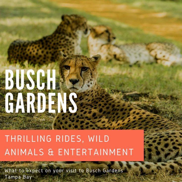 c585ab483e531368a6db5cd8aa18f93c - Is The Safari Included In Busch Gardens