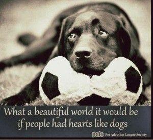 Beautiful Quotes about Dogs Images