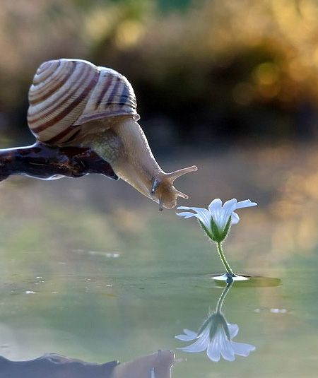 """Life of Snail"", by talented Ukrainian photographer Vyacheslav Mishchenko (Macro)"