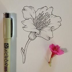 drawing Illustration art artists on tumblr botanical noel badges pugh