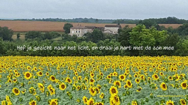 Citaten Zomer Gratis : Beste zon citaten op pinterest zomer woorden citaat