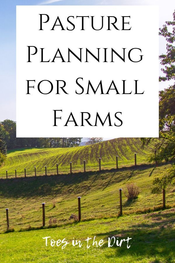 Pasture Planning On Small Farms Small Farm Backyard Farming