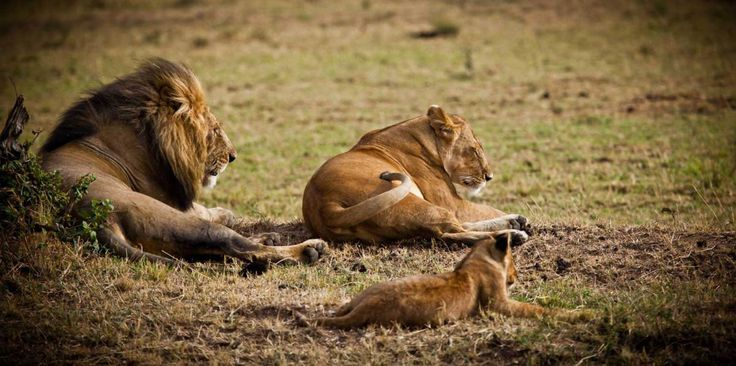 That time we were surrounded by lions on safari