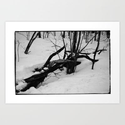 Norwegian forest V Art Print by Plasmodi - $17.00