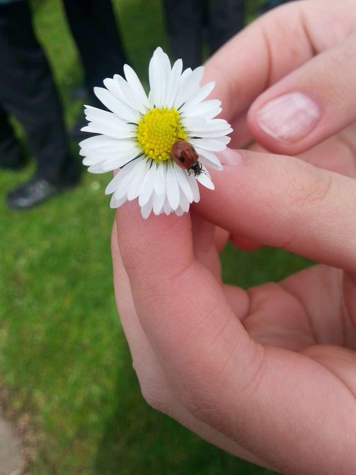 Spring is here #flowers #spring #ladybird