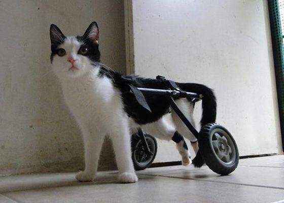 Silla con tubos de pvc silla con tubos blancos como hacer una silla - Sillas de ruedas para perros baratas ...