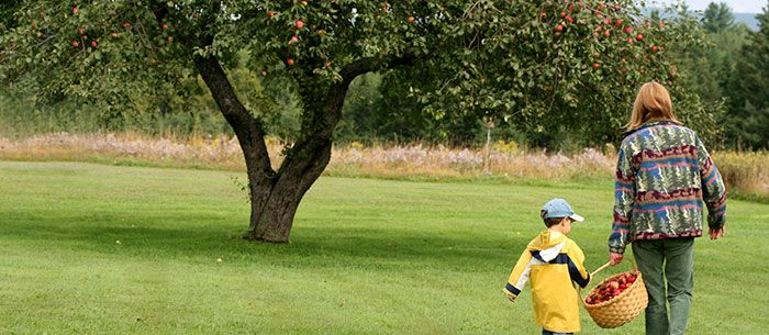 Ghostwriting: Your Apple-Picking Guide, State-By-State