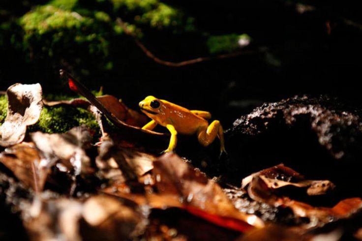 La biodiversidad se tomará las salas de cine con 'Colombia, Magia Salvaje' | Marca país Colombia