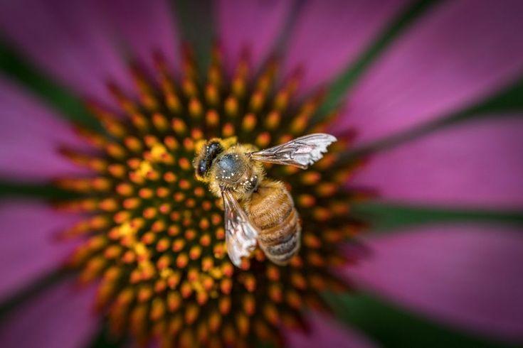 Bee by makbet666