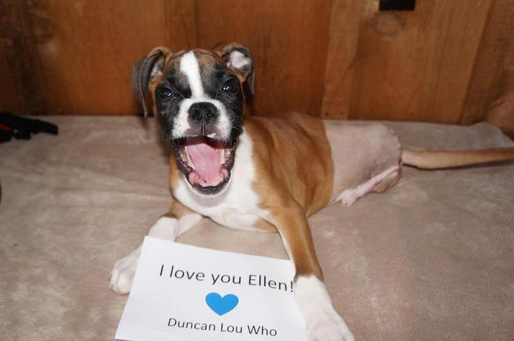 WATCH A happy for Duncan, a twolegged dog who
