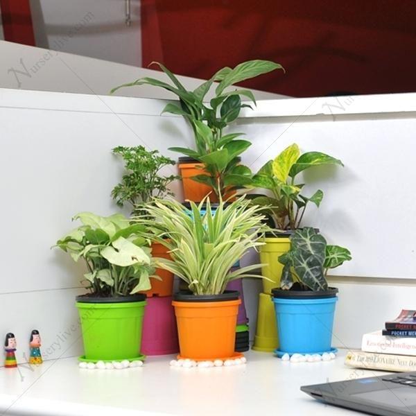 Best Office Desk Plants Buy Table Top Office Desk Plants Online At