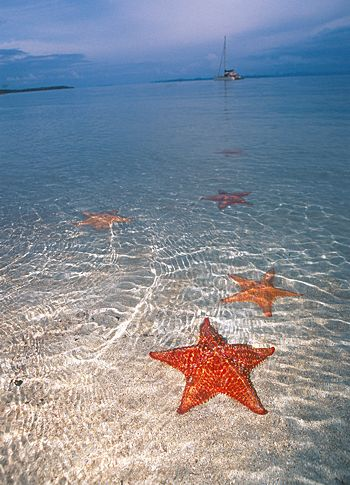 Starfish Beach, Bocas del Toro, Panama. My favourite beach in the entire world #LetsGoHoloHolo
