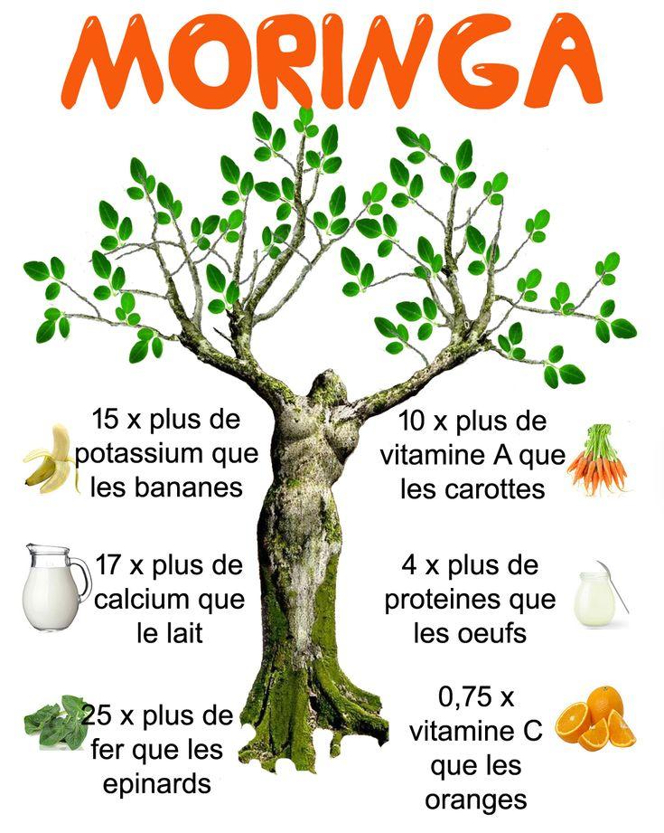moringa infographic francais