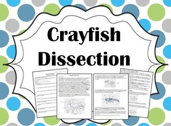 The 25 best classes of vertebrates ideas on pinterest basic biology crayfish dissection fandeluxe Image collections