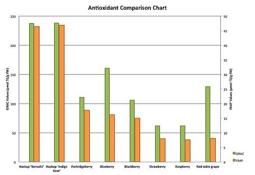 Antioxidant comparison of Haskap to other Berries