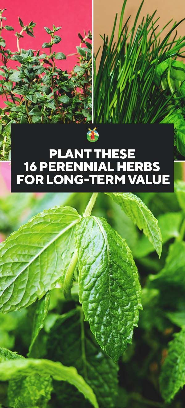 Plant These 16 Perennial Herbs for Long-term Value