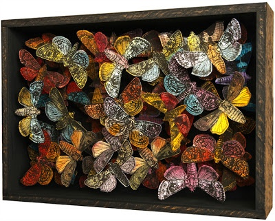 John Dilnot - box of moths!