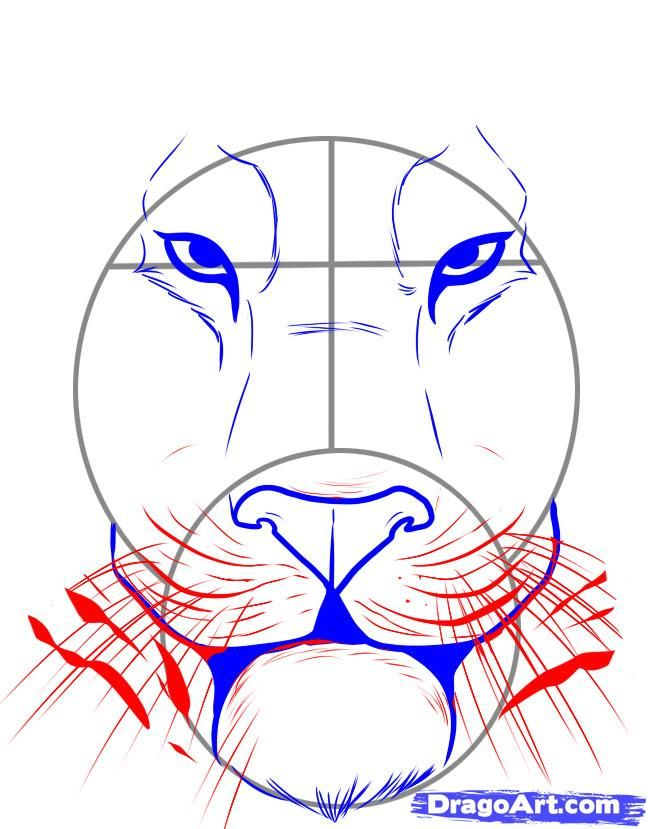 how to draw a tiger face step 4