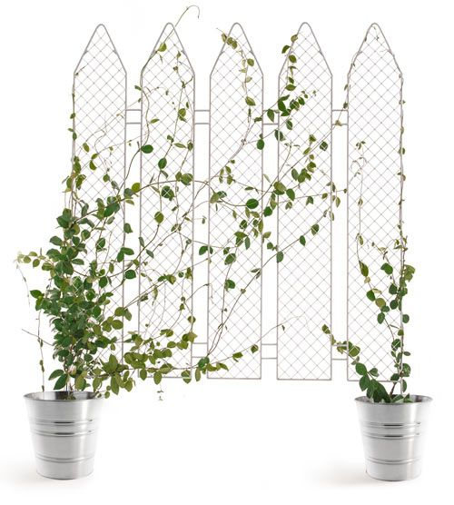 Get Out! Plant The Fence by Andrea Rekalidis Design