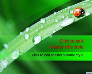 This is a free ladybug PowerPoint template design with green background color and high quality picture. The green leave has a nice water drop effect after the rain and green background design with red ladybug illustration. The master slide pictures the beautiful dawn, as a ladybug is seen on a leaf with dew drop scattered …