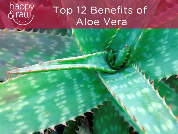 Aloe vera is quite an incredible medicinal plant full of nutritional benefits. In this article, I'll share with you the top 12 benefits of aloe vera.