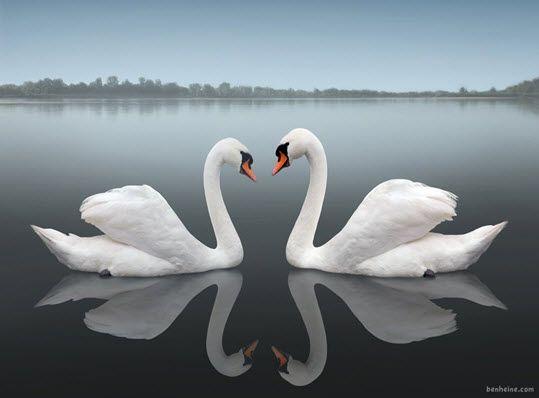 De Wondere Wereld van Reflectie Fotografie