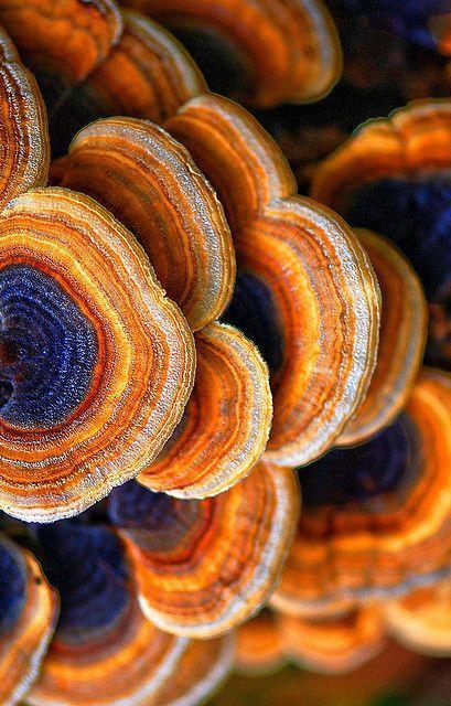 Tree Fungus                                                                                                                                                                                 More