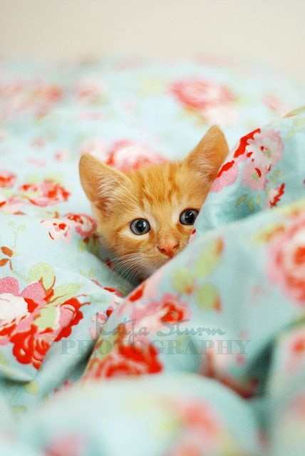 Nothin' better than a little orange kitten  I shall name you marmalade and all will be right with the world