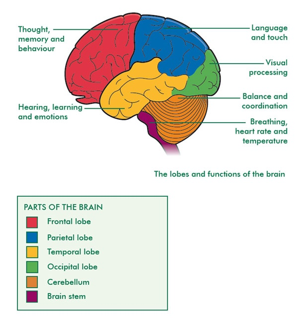 brain cancer diagrams  #10