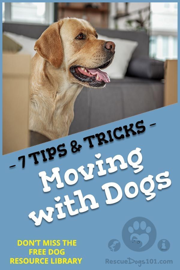 Moving With Dogs 7 Tips Tricks Dog Training Dog Care Tips