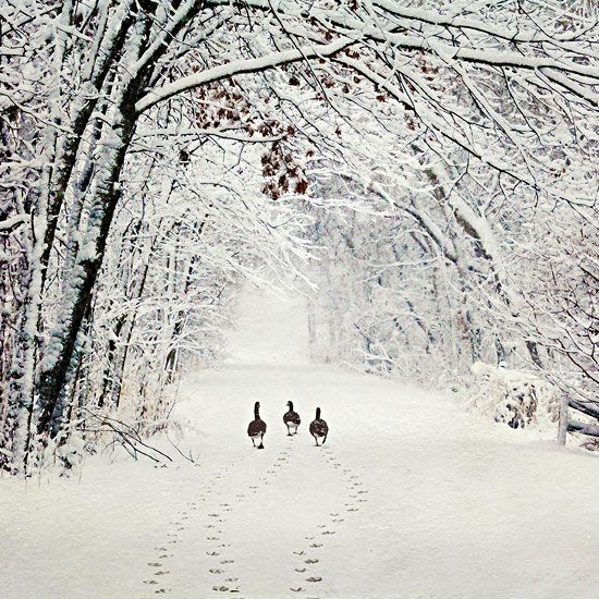 ✻BugArt Christmas Landscapes ~ Geese Walk. CHRISTMAS LANDSCAPES Designed by Jane Crowther. Original Art Photography by Lynnette Henderson.