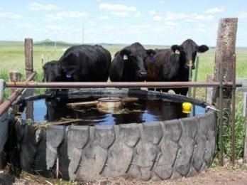 Best 25 Livestock Water Tanks Ideas On Pinterest