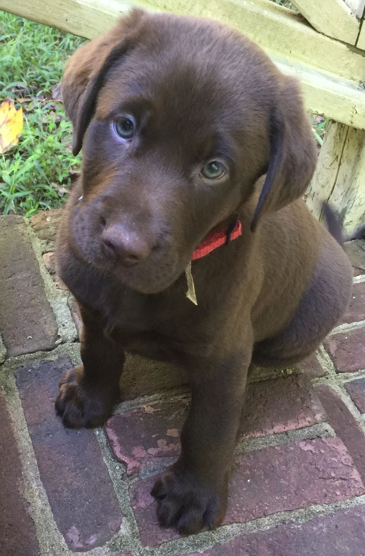 3160 best dogs & puppies images on Pinterest | Animals, Friends ...