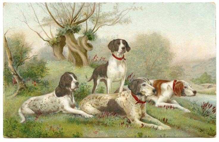 CHIENS DE CHASSE.  HUNTING DOGS.