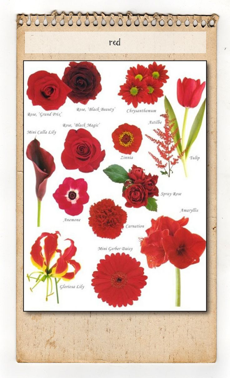 17 Best images about flower names & colors on Pinterest | Seasons, Fall flowers and Flower