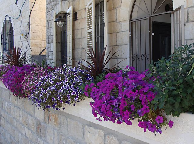 : Container Gardens, Idea, Boxes Containers, Colors, Color Purple, Window Box Flowers, Flower Boxes, Container Gardening, Window Boxes