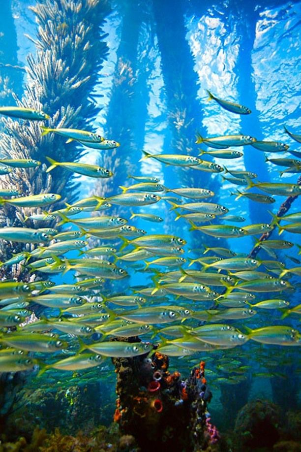The Busselton Jetty Underwater Observatory  - Western Australia
