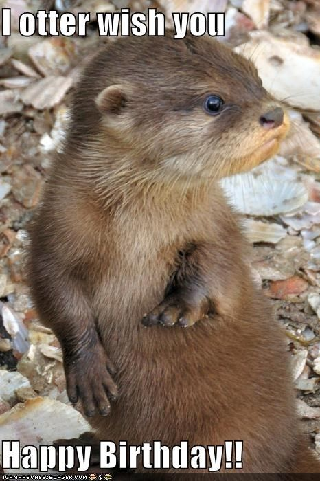 I otter wish you  Happy Birthday!!