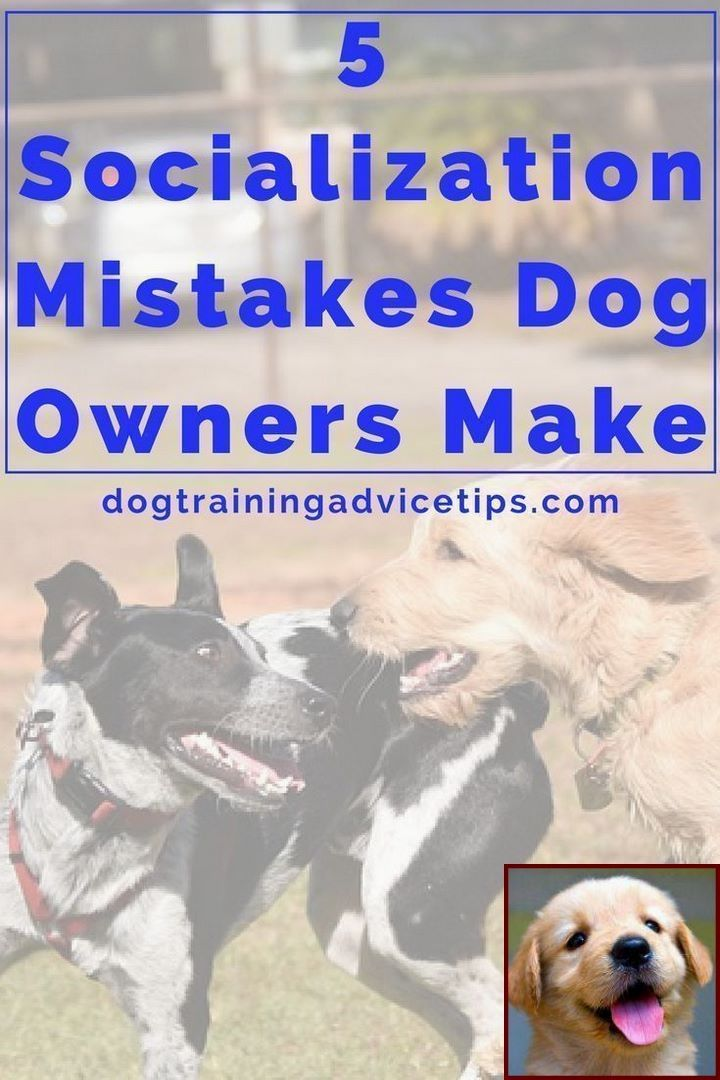 House Training A Dalmatian Puppy And How To Use Training Clicker