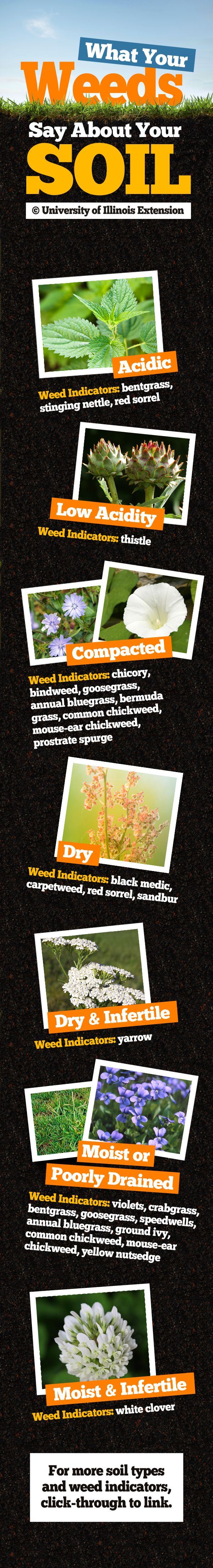 What Your Weeds Say About Your Soil. Want to learn more about soil testing? Check out AgSource Laboratories http://agsource.crinet.com/page298/Agronomy