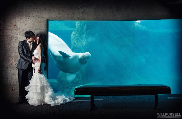 The Vancouver Aquarium was voted best wedding reception venue in Vancouver.