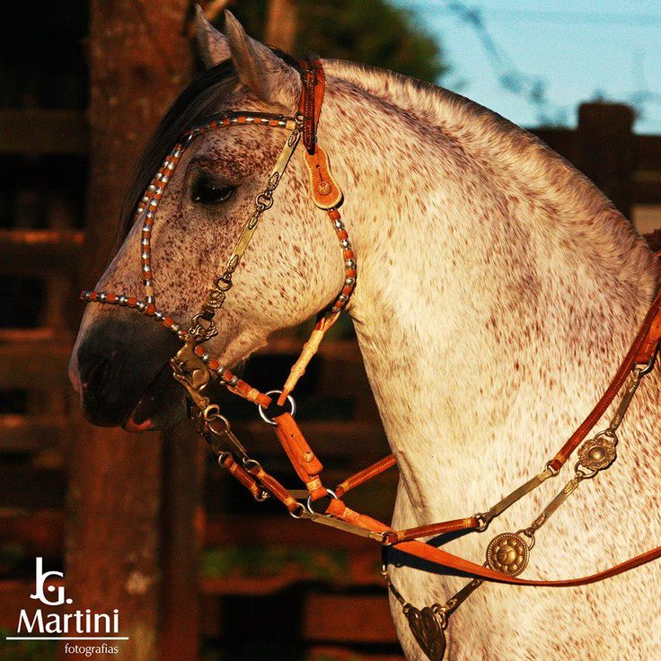 Horse In Latin 17 Best images about L...