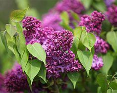 Die Besten 17 Bilder Zu Garten & Co Auf Pinterest | Zement ... Garten Anleitung Gartenpflege