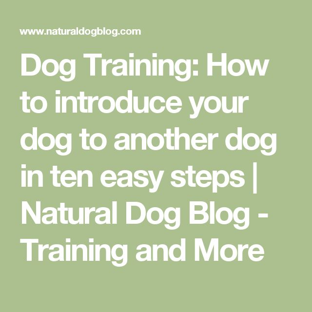 Dog Training:  How to introduce your dog to another dog in ten easy steps | Natural Dog Blog - Training and More